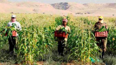 """Photo of """"الزراعة"""" تطلق خدمة طلب العمالة المؤقتة إلكترونيًا لدعم وتمكين المزارعين"""